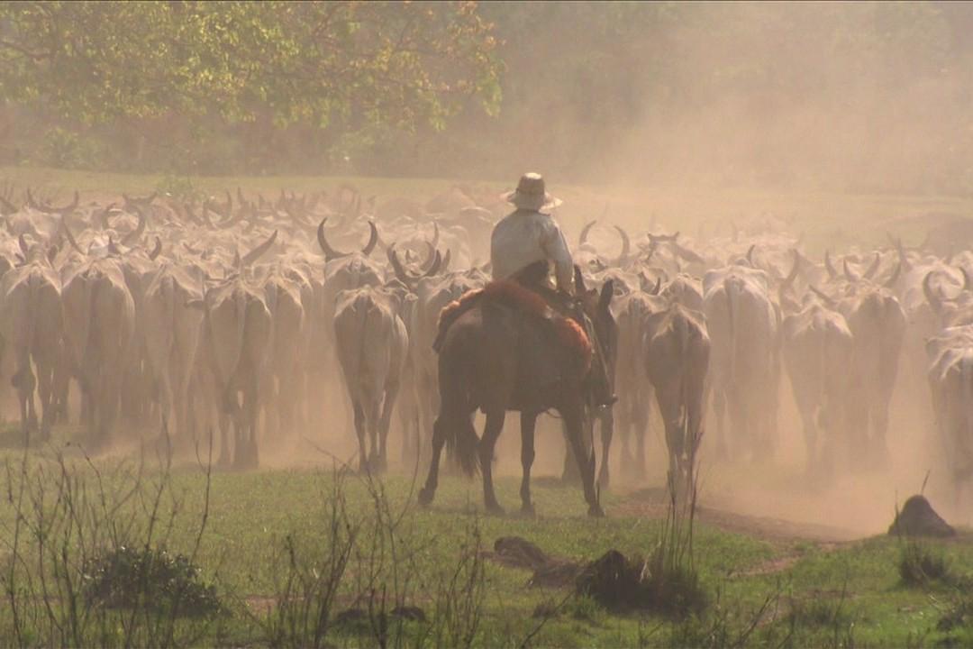 df987462c3c Grande expectativa para último leilão do ano no Pantanal