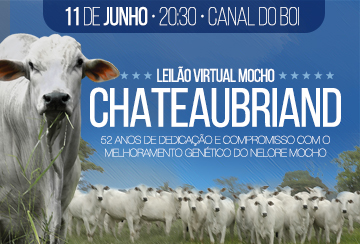 LEILÃO VIRTUAL MOCHO CHATEAUBRIAND